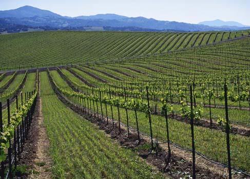 FORT Systems Wine Platform